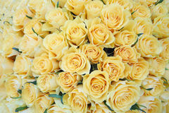 Bouquet fraîchement de grandes belles roses jaunes de coupe. Photographie stock libre de droits
