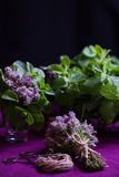 Bouquet of fragrant herbs. Mint and thyme. The style of the dark Royalty Free Stock Images