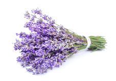 Bouquet of a fragrant lavender Royalty Free Stock Photography