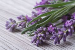 Bouquet of fragrant lavender flowers Stock Photo