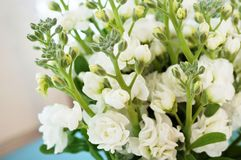 Bouquet of fragrant white stock flowers (matthiola) Stock Images