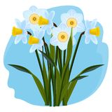 Bouquet of fresh aromatic daffodils of light blue color Stock Photo