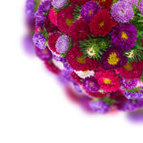 Bouquet of fresh aster flowers Royalty Free Stock Photography