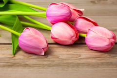 Bouquet of  Fresh Beautiful Tulips on wooden texture Royalty Free Stock Image