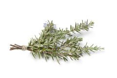 Bouquet of fresh blooming rosemary Royalty Free Stock Photos