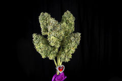 Bouquet of fresh cannabis flowers Mangolope marijuana strain t Royalty Free Stock Image