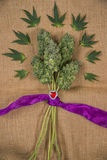 Bouquet of fresh cannabis flowers Mangolope marijuana strain t Royalty Free Stock Photography