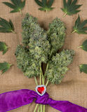 Bouquet of fresh cannabis flowers Mangolope marijuana strain t Stock Photos