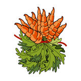 Bouquet of fresh carrots Royalty Free Stock Photo
