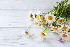 Bouquet of fresh  chamomile Royalty Free Stock Image