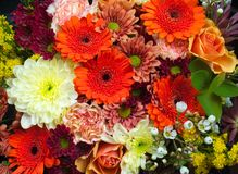 Bouquet of fresh and colorful flowers Stock Images