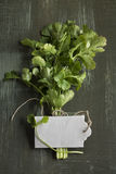 Bouquet of fresh coriander or cilantro Stock Images