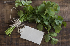 Bouquet of fresh coriander or cilantro Stock Photos