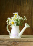 Bouquet of fresh daisies camomile Stock Photography