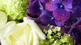 Bouquet of fresh flowers stock video footage