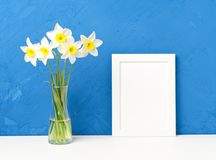 Bouquet of fresh flowers, daffodils in vase on white table, opposite blue textured concrete wall. Empty space for text. Bouquet of fresh flowers, daffodils with Royalty Free Stock Image