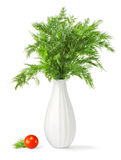 Bouquet of fresh green dill in a vase. Over white background royalty free stock photography