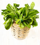 A bouquet of fresh greens  in a bowl wicker basket on white wood Stock Images