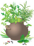 Bouquet fresh herbs in ceramic pot. Bouquet fresh green herbs in ceramic pot on white background vector illustration