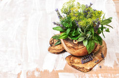 Bouquet of fresh herbs and olive wood kithchen tools. Healthy fo Royalty Free Stock Image