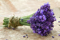 Bouquet of fresh lavenders Royalty Free Stock Image