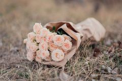 Bouquet of fresh light orange roses in craft paper royalty free stock images
