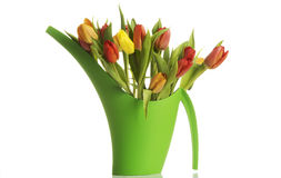 Bouquet of fresh living tulips. Stock Photos