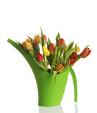 Bouquet of fresh living tulips. Stock Image