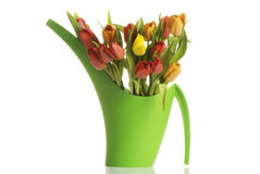 Bouquet of fresh living tulips. Royalty Free Stock Photo