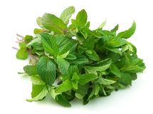 Bouquet of fresh mint Royalty Free Stock Photo
