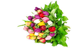Bouquet of fresh multicolor tulips. Spring flowers Stock Images