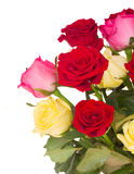 Bouquet of fresh multicolored  roses Royalty Free Stock Image