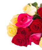 Bouquet of fresh multicolored  roses Royalty Free Stock Images