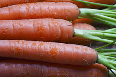 Bouquet of fresh organic carrots. Royalty Free Stock Images