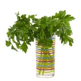 Bouquet of fresh parsley Stock Photos