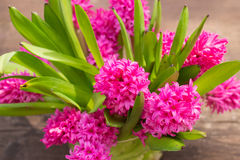 Bouquet of fresh pink spring flowers Stock Photo