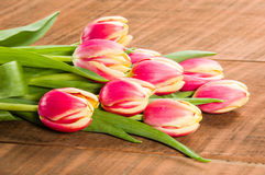 Bouquet of fresh pink and yellow tulips Royalty Free Stock Image
