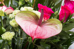 Bouquet from fresh red roses and  anthurium Royalty Free Stock Photography