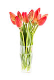 Bouquet of fresh red tulips in vase isolated over white Stock Photos
