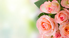 Bouquet of fresh roses. Border of pink roses over garden bokeh background banner Royalty Free Stock Photo