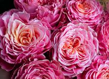 Bouquet of fresh roses, flower bright background. Closeup. Roses in flower shop.  stock photography