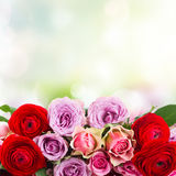 Bouquet of fresh roses and ranunculus. Border of roses and ranunculus  in vase  on bokeh background with copy space Royalty Free Stock Photo