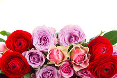Bouquet of fresh roses and ranunculus. Border of roses and ranunculus  in vase isolated on white background Stock Images