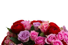 Bouquet of fresh roses and ranunculus. Bunch of roses and ranunculus  in vase isolated on white background Royalty Free Stock Photos