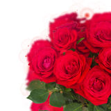 Bouquet of fresh roses Stock Photography