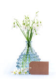 Bouquet of fresh snowdrops flowers in a glass vase and a card on white background, vertical Royalty Free Stock Photo
