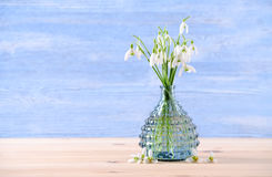 Bouquet of fresh snowdrops flowers in a glass vase on wooden and blue background Royalty Free Stock Images