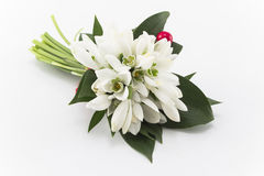 Bouquet of Fresh Snowdrops  on White Royalty Free Stock Photo