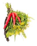 Bouquet of fresh spice Royalty Free Stock Photography