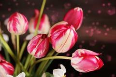 Bouquet of fresh spring bicolor purple tulips Stock Photos